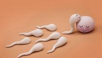 3 cách tính ngày rụng trứng đơn giản chính xác nhất