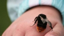 Cách nhận biết vết cắn của từng loại côn trùng và xử trí cho bé