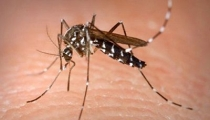 Phân biệt sốt xuất huyết và sốt phát ban chỉ bằng một thao tác đơn giản